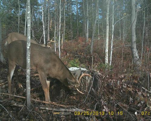 quebecdeer_hunting19