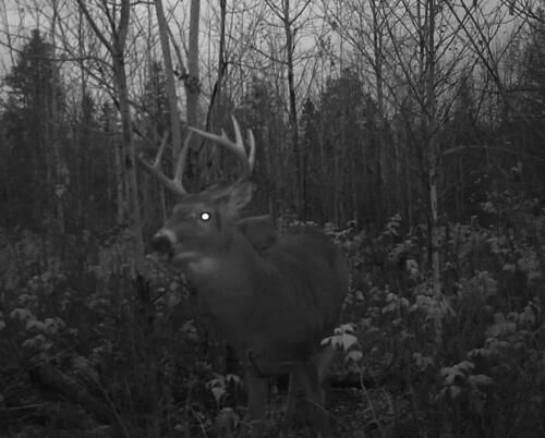 quebecdeer_hunting20
