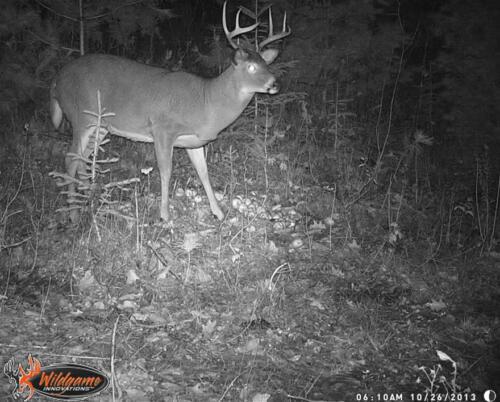 quebecdeer_hunting21